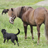 Horse and dog involved in a controversy.
