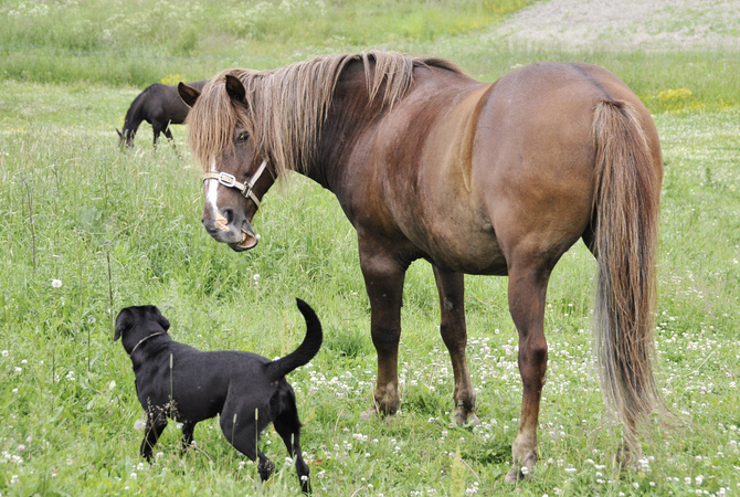 Loose dog with unhappy horse in pasture.