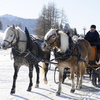Horses pulling a sledge in a winter wonderland.