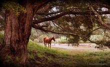 Horse near river.