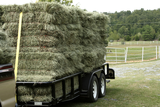 Freshly-cut grass hay on its way to storage.