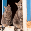 Barn cats as companions for your horse.