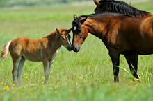 Healthy mare and foal in pasture.
