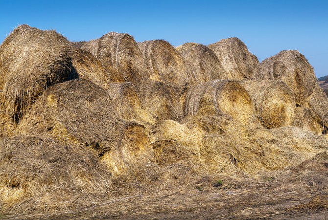 Allergens in dust and mold in deteriorating hay - A cause of horse respiratory disease.
