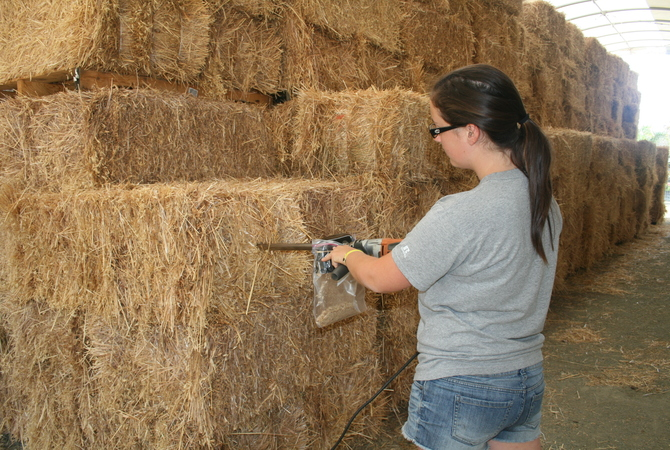 Using a hay probe to get samples of hay for analysis.