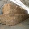 Oat hay carefully stored in a barn