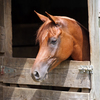 Horse in stall on a warm summer day.