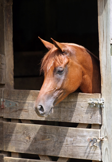 Horse at home in stall.