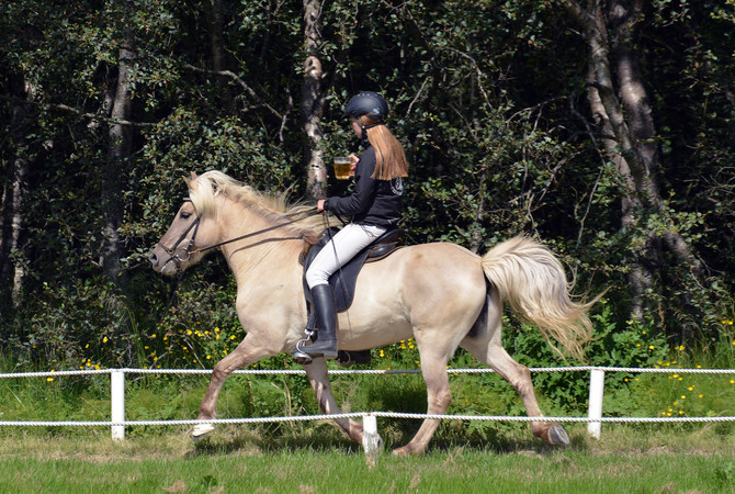 Icelandic Horse - Know your horse breeds and resources.