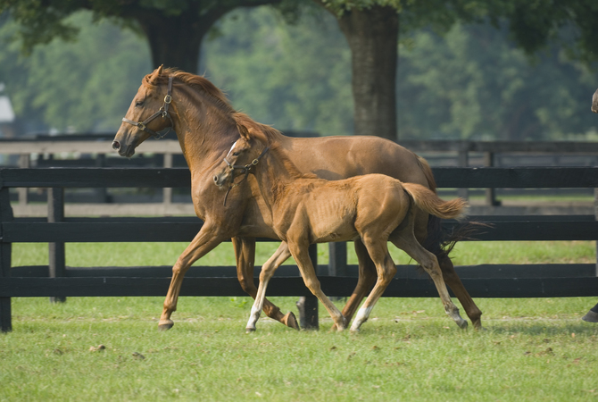 An active mare and foal courtesy of good genetics relative to hoof growth.