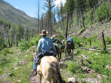 Horses and riders on a wilderness trail.