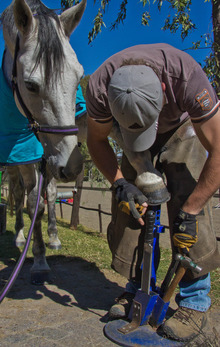 Farrier caring for horse's hooves.