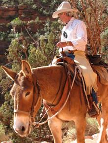 Cowboy riding a mule.
