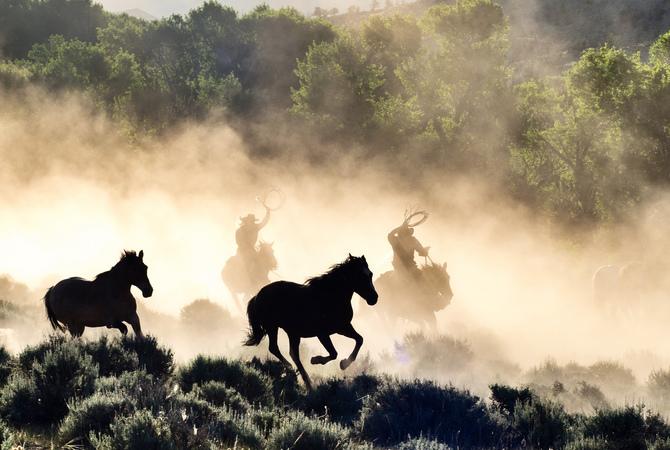 Cowboys rounding up wild horses.