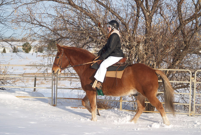 Rider and horse enjoying a snowy trail ride.