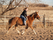 Horse and rider in fall setting.