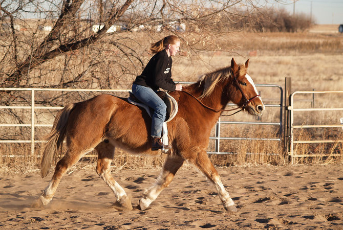 Riding horses on trails - an open invitation to ticks.