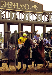 Horses ready for the race.