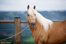 Establishing equine identification data base.