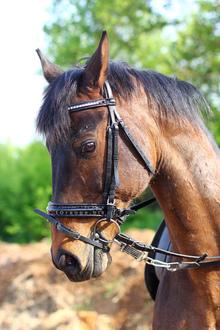 Horse wearing a regular halter.