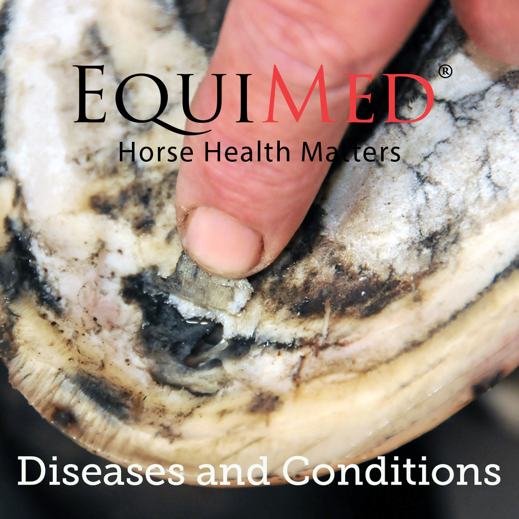 Equine Energy, Thermo Regulation, and Electrolyte Balance