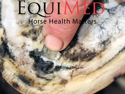 Diagnosing Equine Disease | EquiMed - Horse Health Matters