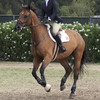 Horse stride length affected by digestive health.