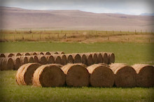 Dried round bales of hay for horses.