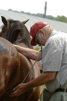 Veterinarian examining horse.