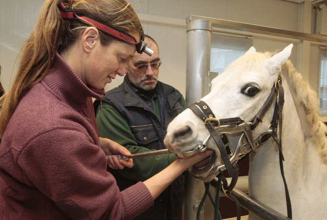 Equine dentist floating a horse's teeth.