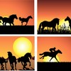 The joy of horses from dawn to dusk!