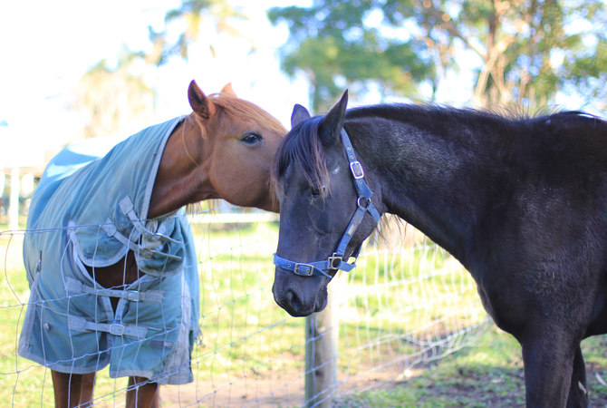 Horse buddies sharing the news about upcoming podcast.