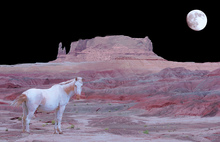 A white horse in a desert setting on a moonlit night.