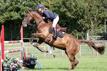 Performance jumper horse in action.