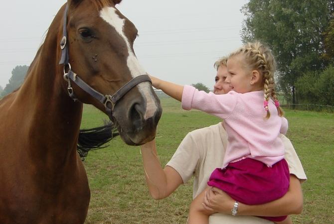 Little girl getting acquainted with a horse.