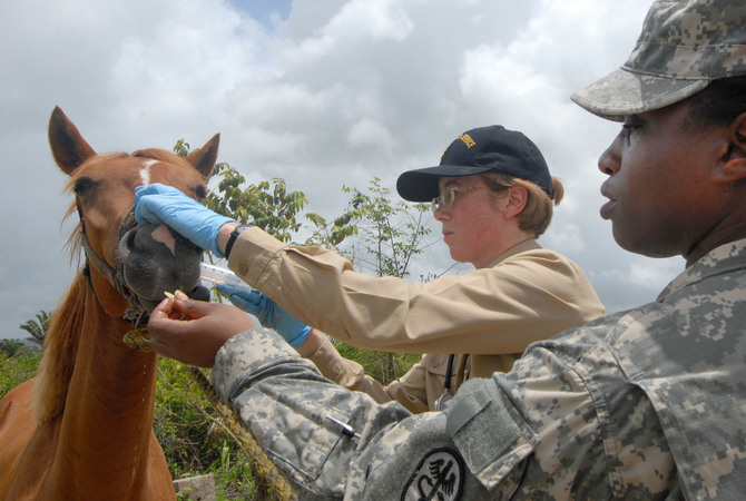 Military veterinarian treating a horse.