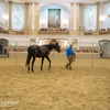 Monty Roberts at work with horse.