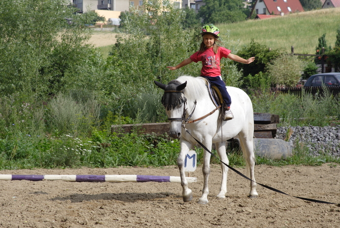 A patient white horse helping young girl achieve her dream.