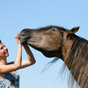 Stubborn horse refusing to let woman examine his teeth.