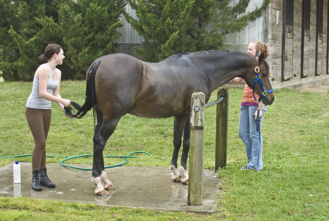 Two young women getting a Thoroughbred ready for a competition.