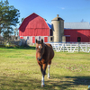 A horse barn adjacent to corral and pasture.