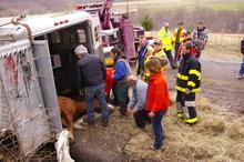 Horse emergency rescue.