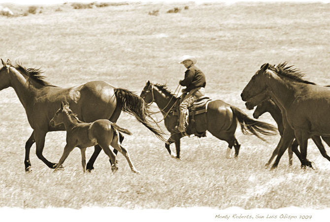 Monty Roberts riding with wild mustangs