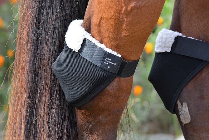 Hock Shields protecting horse's hocks.