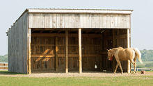 A run-in shed for horses.