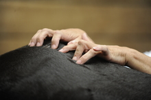 Chiropractice and message therapies for the horse