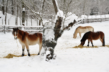Most horses enjoy and thrive during cooler weather