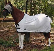 Sox for Horses - Creating a hygienic environment for horse's legs