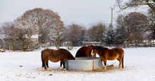 Meeting horse's nutritional needs during cold weather