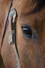 Horse sight.